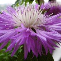 Цветок :: татьяна