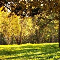 Осень :: ProfIT