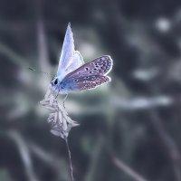 бабочка колечко :: Лилия .