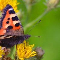 цветок с бабочкой :: леонид логинов