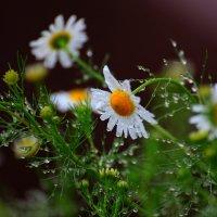 Летний дождь :: Boris Khershberg