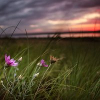 Скоро уж солнце! :: Елена Данько