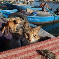 коты и рыба :: Annie Amar