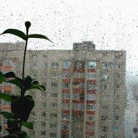 А за окном серый  дождь... :: Алла ZALLA