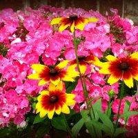 Радуга цветов :: Сергей Карачин