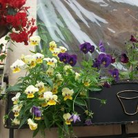 Улыбка природы - цветы. Их есть у нас. :: Галина Бобкина