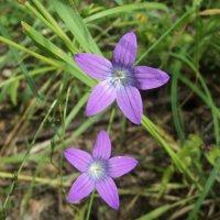 полевые цветы :: Maryana Petrova