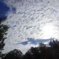 В небе, будто из зефира, облаков пушистый слой выложен красиво :: Маргарита Батырева