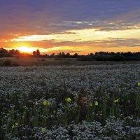 цветочный закат :: оксана