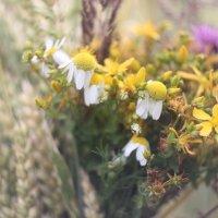 букет из палевых цветов :: Дмитрий