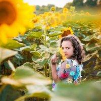солнечное поле :: Анна Молокова
