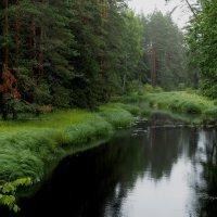 Лес :: Надежда Крылова