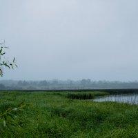 Дождь :: Надежда Крылова