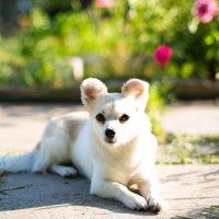 Собака отдыхает на даче :: Valentina Zaytseva