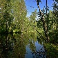 Озеро в лесу. :: Наталья