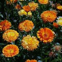 Летние цветы :: Владимир Бровко