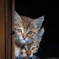 Котята :: Владимир Габов