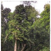 Деревья в Парке водопадов Менделиха :: Николай Милоградский