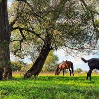 И только слышен хруст травы... :: Лесо-Вед (Баранов)