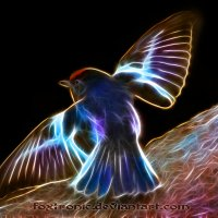 Neo Bird :: Andy Kloxx Foxtronic
