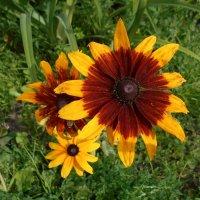Необычный цветок :: Tarka