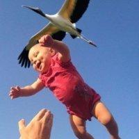 А ведь вправду аист приносит детей! :: astanafoto kazakhstan