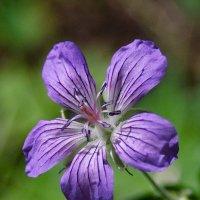 Цветок в лесу :: Владимир Гришин