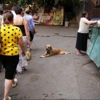Для дворовой собаки :: Анна Воробьева