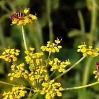 Пчелиная карусель :: Фотогруппа Весна.