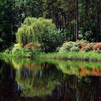 В саду цветов :: Михаил Новиков
