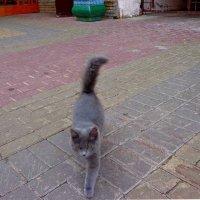 я брожу по улицам один... :: Наталья Сазонова