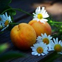 Ох, уж эти абрикосы... :: Татьяна Евдокимова