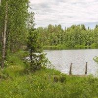 Лесное озеро. :: Zoya P.