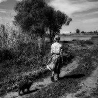 Прогулки с котом :: Zebra
