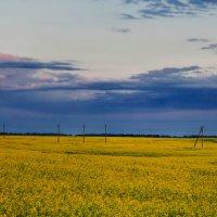 Панорама цветущей люцерны... :: Анатолий Клепешнёв