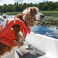 В первое плавание :: liudmila drake