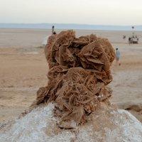 Роза пустыни :: Lera Morozova