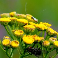 длинноусый и муха :: Александр Прокудин