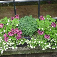 Городские цветы 3 :: Марина Домосилецкая