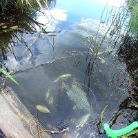 И рыбка радует! :: Сергей F
