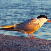 Птичка :: Раф Аэль