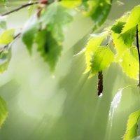 У природы нет плохой погоды :: Роман Савоцкий