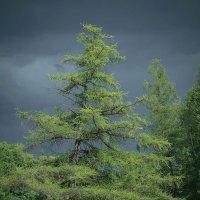 У счастья нет плохой погоды :: Евгения Кирильченко