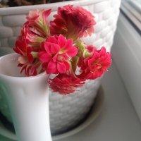 Красный красавец :: Ирина Горовик