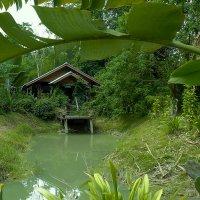 Таиланд. Национальный парк. Домик в джунглях. :: Elena Izotova