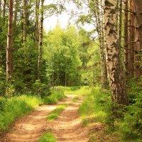 Прогулка в летнем лесу :: Татьяна Ломтева