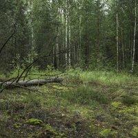 лес :: Яков Реймер