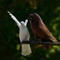 асса! :: linnud