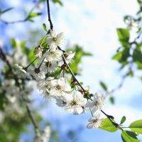 Весной :: Ксения Трифонова