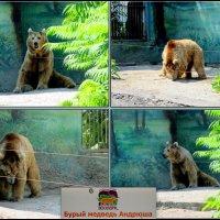 Медведь Андрюша :: Нина Бутко